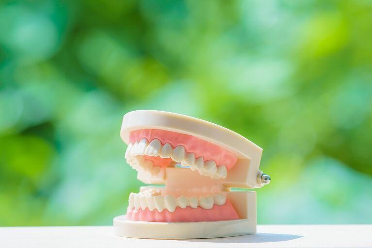 入れ歯の耐久性